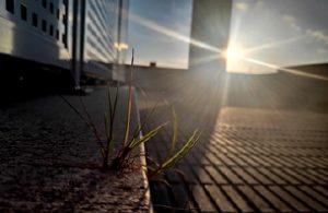 Fotografía medioambiente cuarentena UMH